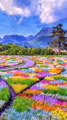 Beautiful Nature Pictures, Beautiful Nature Scenes, Beautiful Fantasy Art, Amazing Nature, Nature Photos, Beautiful Places, Beautiful Scenery, Beautiful Landscape Wallpaper, Beautiful Landscapes