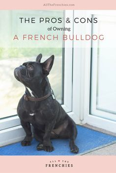 The Pros and Cons of Owning a French Bulldog  All The Frenchies