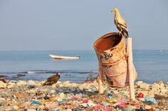 Photo about Egyptian vulture on rubbish-bin (beach of Soctra Island in Hadibo town). Image of environment, messy, recycle - 14585967 Best Photoshop Actions, Sistema Solar, Vulture, Sea And Ocean, Save The Planet, Strand, Egyptian, Recycling, Environment