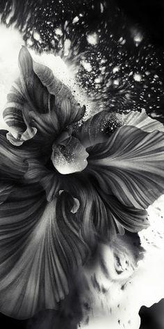 flower, black  white