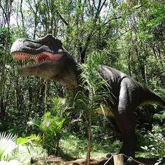 Em Canela Rio Grande do Sul os dinossauros estão soltos.....no Vale dos Dinossauros essas espécies medem mais de 10 metros de altura... Tem Tiranossauro Rex Tricerátopo Velociraptor Braquiossauro entre outros.... http://ift.tt/20PTQEt  #mundoafora #dedmundoafora  #travel #viagem #tour #tur #trip #travelblogger #travelblog #braziliantravelblog #blogdeviagem #rbbviagem #tripadvisor #trippics #instatravel #instagood #wanderlust #photooftheday #blogueirorbbv  #amazing #ap #rs #gramado #canela…