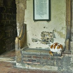 Laptop: Canterbury Cathedral Cat Remembered - Life With Cats Canterbury Cathedral, Cat Party, Beautiful Creatures, Cemetery, Neko, Cute Cats, Cat Lovers, Dog Cat, Scenery