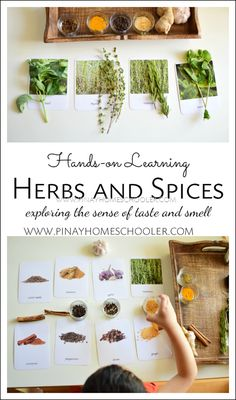 Hands-on Learning on Herbs and Spices - Kinderspiele Montessori Trays, Montessori Kindergarten, Montessori Science, Montessori Practical Life, Montessori Homeschool, Montessori Classroom, Montessori Toddler, Montessori Materials, Toddler Learning