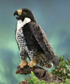 Swooping in for a perfect landing is the Folkmanis® PEREGRINE FALCON puppet. Signature markings of the species, extraordinary design and realistic movement in the head, mouth and wings give flight to