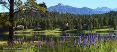 Pagosa Springs CO 5 hr drive to Pikes Peak Pagosa Springs Colorado, Places Ive Been, Places To Go, Pikes Peak, The Mountains Are Calling, John Muir, Weekend Getaways, Rocky Mountains, Wild Flowers