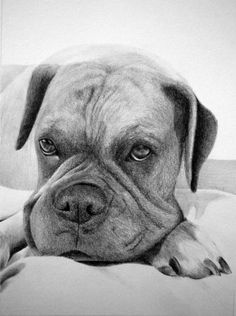 Custom Pet Portrait From Your Photo - 8x10 Original Cat Dog Horse Pencil Sketch Art Drawing From Picture on Etsy, $79.01 CAD