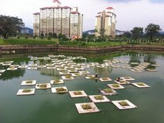 Floating Wetlands, Floating Islands, Aqua Biofilter, Floating Reedbeds, Aquaponics Kitchen Garden, Biofilm, Floating Biofilter, Algal bloom, Aquaculture, Waste water treatment |