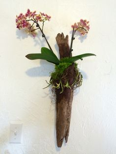 Orchid mounted on found drift wood, covered in Spanish moss and live moss from the backyard.