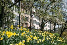 Sehenswürdigkeiten in Bern - Schöne Blütenspots zum Fotografieren Bern, Travel, Daffodils, Roses Garden, Switzerland, Landscape, Nature, Flowers, Nice Asses