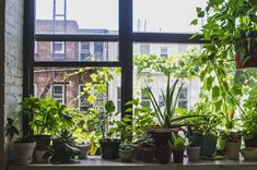 Urban Garden Design 4 Tips for Setting Up a Windowsill Garden - Modern Farmer - Act now to ensure you have fresh supply of basil, mint and more until spring. Plants On Window Sill, Hanging Plants, Indoor Plants, Potted Plants, Lush Garden, Herb Garden, Balcony Garden, Jardin Luxuriant, Smart Garden