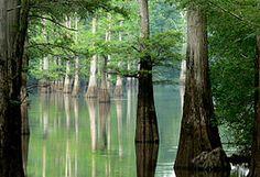 Arkansas - Wikipedia, la enciclopedia libre