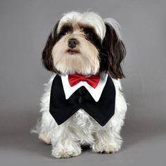 Modelagem Moldes Roupas Para Cães Caes Cachorro 10 Modelos - R$ 99,90