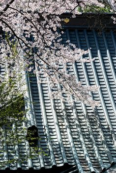 Spring Yakushido by shinichiro* on Flickr.