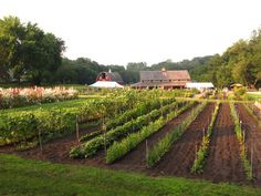 Seed Savers Heritage Farm in Decorah, Iowa. In Decorah, my mom's birthplace. :)