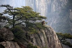 "Groups of Tibetan macaques were captured cozily bathing in the sun in the Huangshan mountains of Anhui Province, east China, on Saturday.   Native to China, the primate species is mainly found in the east-central part of the country among broadleaf evergreen forests, as well as subtropical and deciduous forests.   Listed as Near Threatened by the IUCN, these beautiful creatures nicknamed ""elves of Huangshan Mountain"" have faced threats from hunting and other human activities."
