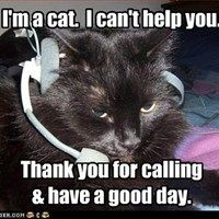 catcalling if it will not work on cats it will not work on humans There's science behind your inexplicably close relationship with your cat and behaviors that appeal to humans house cats have have to work to.