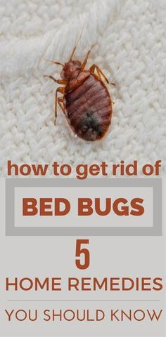 30 best how to get rid of bed bugs images home remedies rid of rh pinterest com