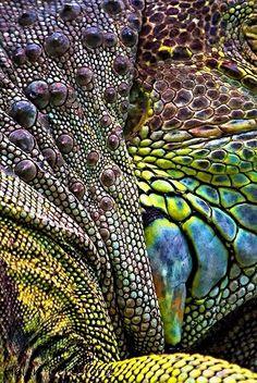 Skin, texture, multicolor