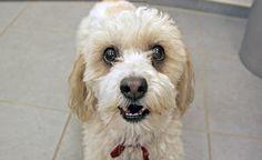 (Zentrum der Gesundheit) - Haustiere erhalten viel zu viele Impfungen. Informieren Sie sich selbst über nötige und unnötige Impfungen und bewahren Sie Ihren Hund vor schädlichen Impffolgen.