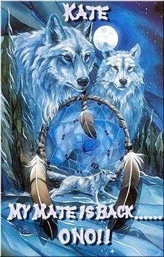 Explore Wolf Dream Catcher Wallpaper on WallpaperSafari Native American Wolf, Native American Pictures, American Indian Art, American Indians, Tier Wolf, Indian Wolf, Native Indian, Wolf Pictures, Beautiful Wolves