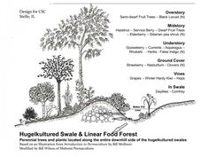 swale permaculture - Google Search