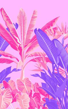 Pink and Purple Tropical Jungle Wallpaper Macbook Air Wallpaper, Funny Phone Wallpaper, Tropical Wallpaper, Pink Wallpaper, Pink Nation Wallpaper, Murs Roses, Color Rosa Claro, Neon Licht, Planets Wallpaper
