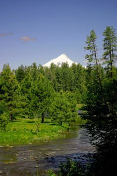 """head of the Metolius River ...home. I wonder if that bench is still there on the walk down to the Head...where my sister carved """"Pavel"""" (cuz she was in love with Pavel Chekov from Star Trek.)"""