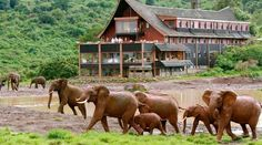 Here are just five places that can't be missed on your holiday to Kenya.