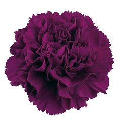 Carnations- carnations are my mums favourite flower