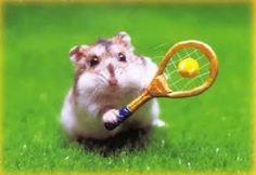 foto criceto tennis immagine
