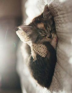Princess kitten dreams.