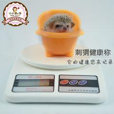 Little Love [e] the African mini pet hedgehog hedgehog health, said electronic scales hedgehog essential supplies