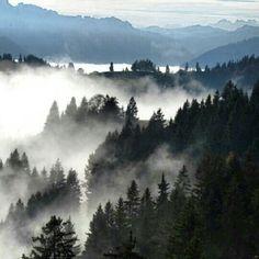 #switzerland #suisse #suizzera #suissmountains #suiza #igerseurope #igerssuisse #igeurope #emmental #hill #hills #tree #forrest #fog #mountains #napf #natur #natur_love #my_switzerland #autunum #herbst - @nigy84- #webstagram
