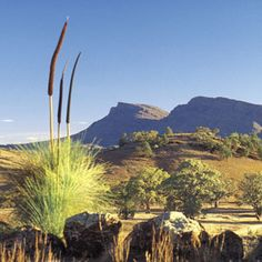 The Flinders Ranges are the largest mountain range in South Australia, which starts about 200 km north of Adelaide
