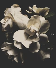 Ivory 3 | A Little Part of the World Florography - shared via #PhotoFridayFun at Pierced Wonderings