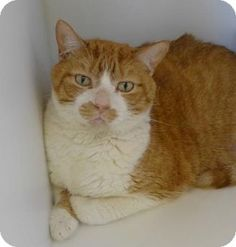 8/13/2016***Meet Butters a cat for adoption. Available at Burlington County…