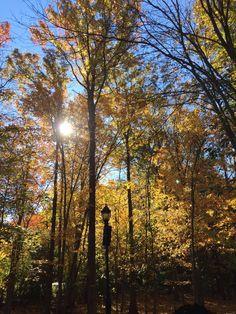 Bloomingdale Park #SIFoliage
