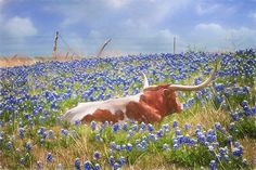 Texas Is Longhorns And Bluebonnets Photograph by David and Carol Kelly Texas Bluebonnets, Texas Longhorns, Longhorn Cattle, Cow Pictures, Western Art, Western Crafts, Cow Art, Texas Hill Country, Texas Travel