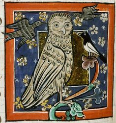 Lechuzas | Iconos Medievales