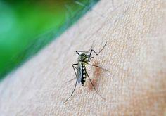 mosquito-braço-repelente-caseiro