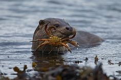 Otters are tough bastards.