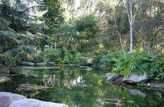 Beautiful backyard pond, private estate in Rancho Santa Fe, California