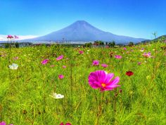 www.pashadelic.com/ ja de hoy pieza aquí. Otoño firma @ Oshino poblado por :Masateru Ono clientes página : https://www.facebk.cm/prfile.php?id=100006945277011&fref=PHT