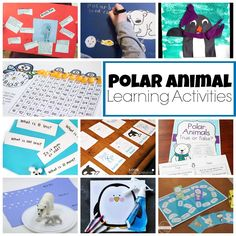 Early elementary science research project investigating the polar bear food chain in the Polar Ecosystem with FREE printable Animal Activities, Kindergarten Activities, Science Activities, Educational Activities, Science Ideas, Letter Activities, Polar Bear Food Chain, Elementary Science, Elementary Teaching
