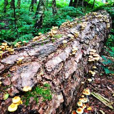 Autumn Trees, Fallen Tree, Hiking, River, Crafts, Inspiration, Fall Trees, Rivers, Handmade Crafts