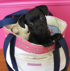 I want a puppy in a vineyard vines bag!
