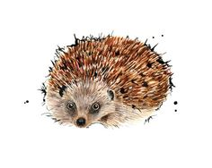 Hedgehog 5 x 7 inch print of original by NatalieIllustrations
