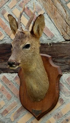 Vintage taxidermy Deer Stag Head mounted on a sheild dated 1979 from France