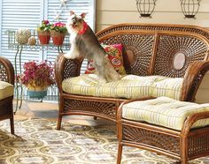 An Azteca Settee in the sunroom is great for a relaxing paws. This is a fun photo, I have the settee and the Schnauzer! Balcony Table And Chairs, Dining Table Chairs, Short Stools, Chair Leg Floor Protectors, Leather Dining Room Chairs, Cabin Furniture, Types Of Furniture, Settee, Coastal Living