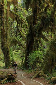 Hall of Mosses, Hoh Rain Forest, Olympic National Park, Washington, United States